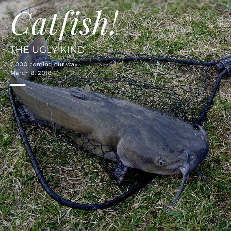 Winter Catfish Stocking — El Paso County Parks & Recreation