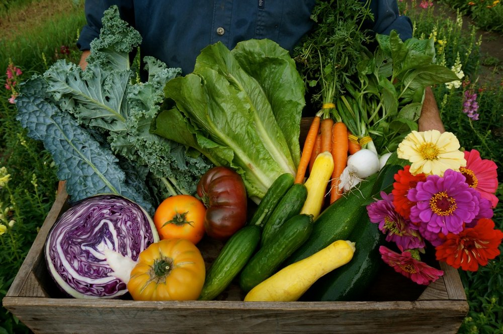 Intervale Community Farm   On-Farm CSA in Burlington's Intervale   Sign Up for Summer Share