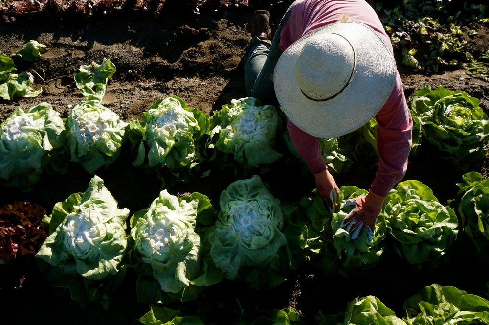 Intervale Community Farm   On-Farm CSA in Burlington's Intervale   Our Shares