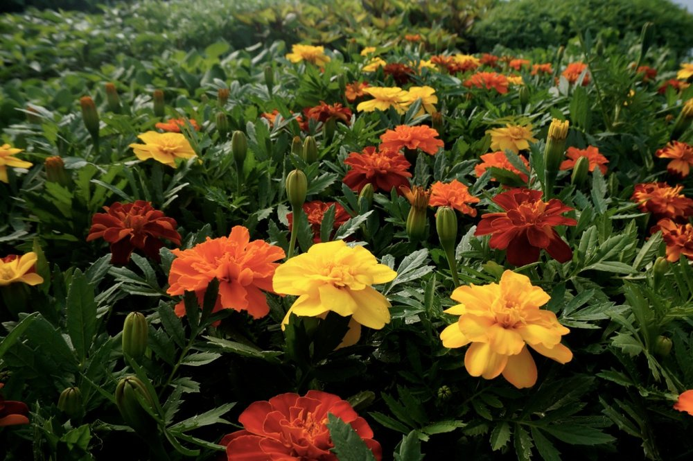 Plant Sale 4.jpg