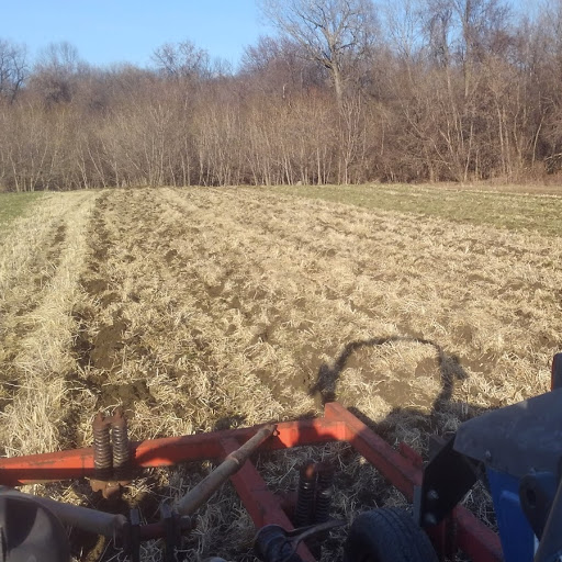Chisel plowing soil-improving cover crops in preparation for the 2018 potato crop.