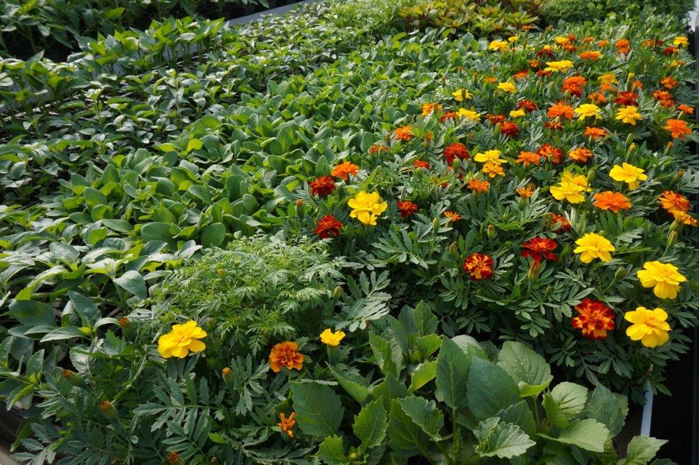 2016 Plant Sale 3.jpg