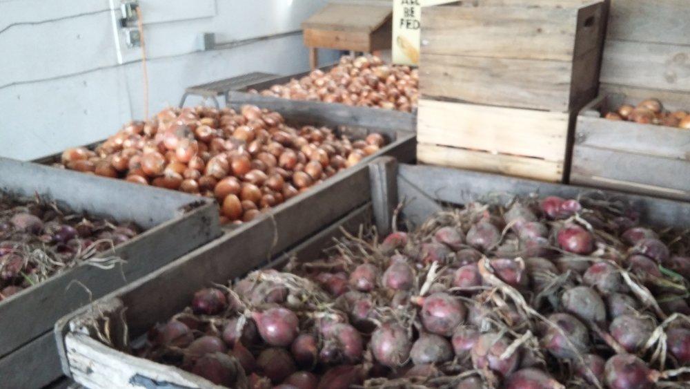 onions begin.jpg