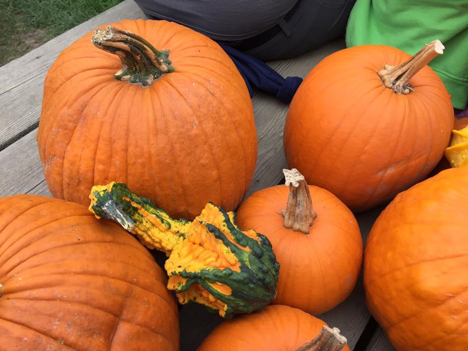 2016 pumpkins by Brenda Mitchell.jpg