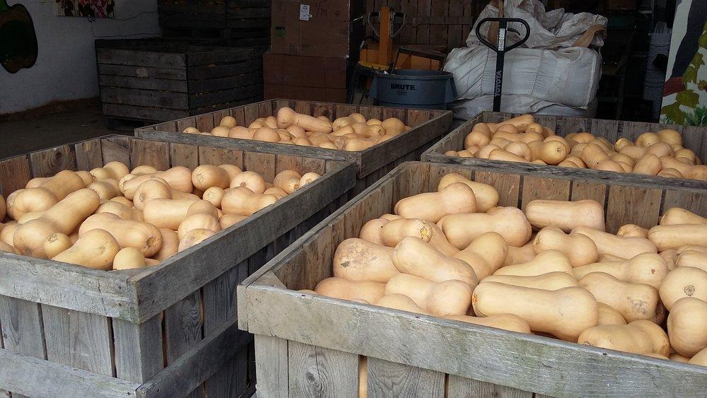 2018 butternut bins.jpg