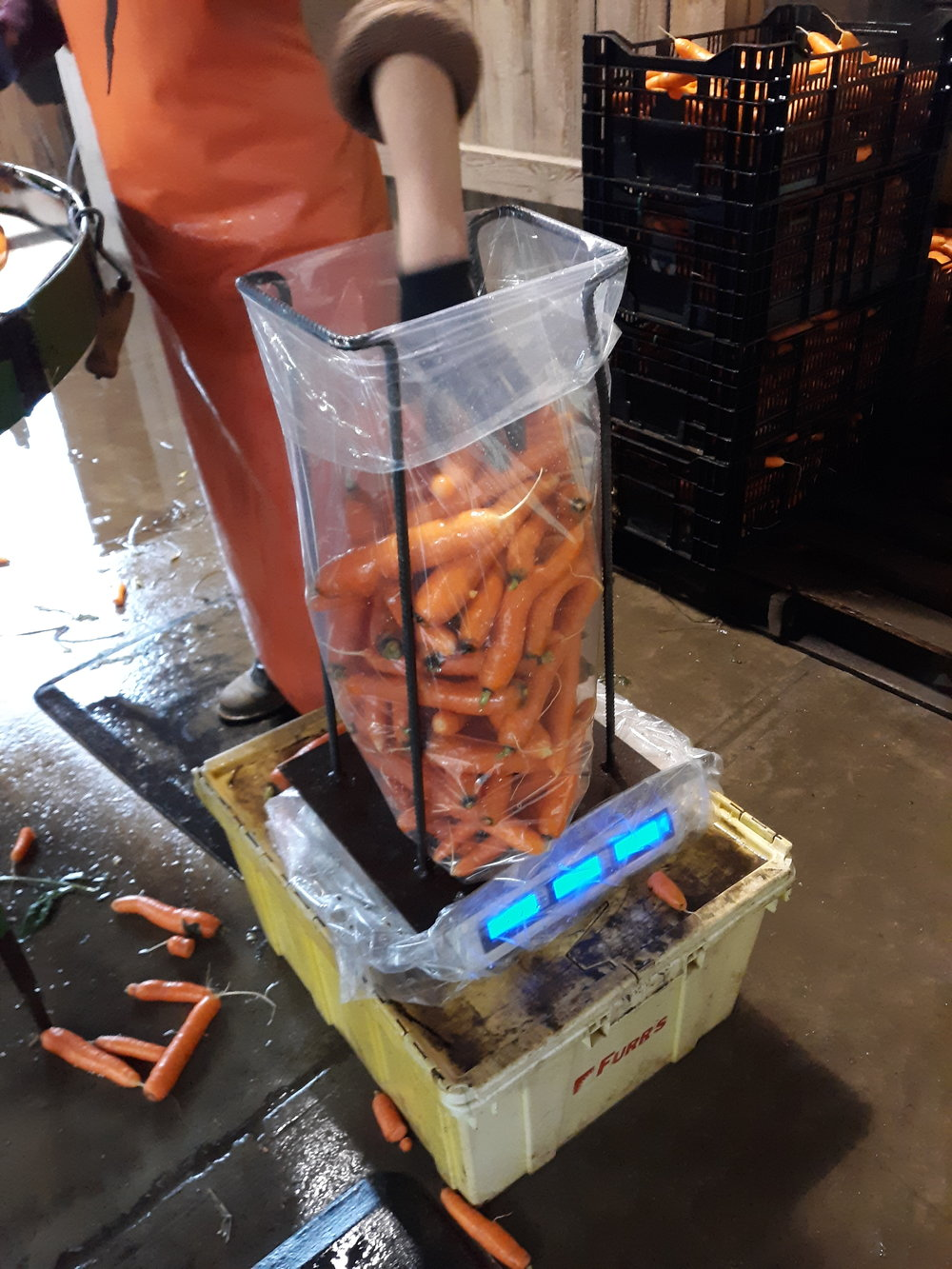 Carrots are packed in 25 lb bags.