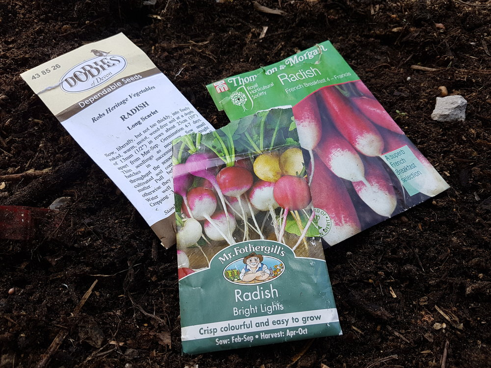 It's time to sow more radishes