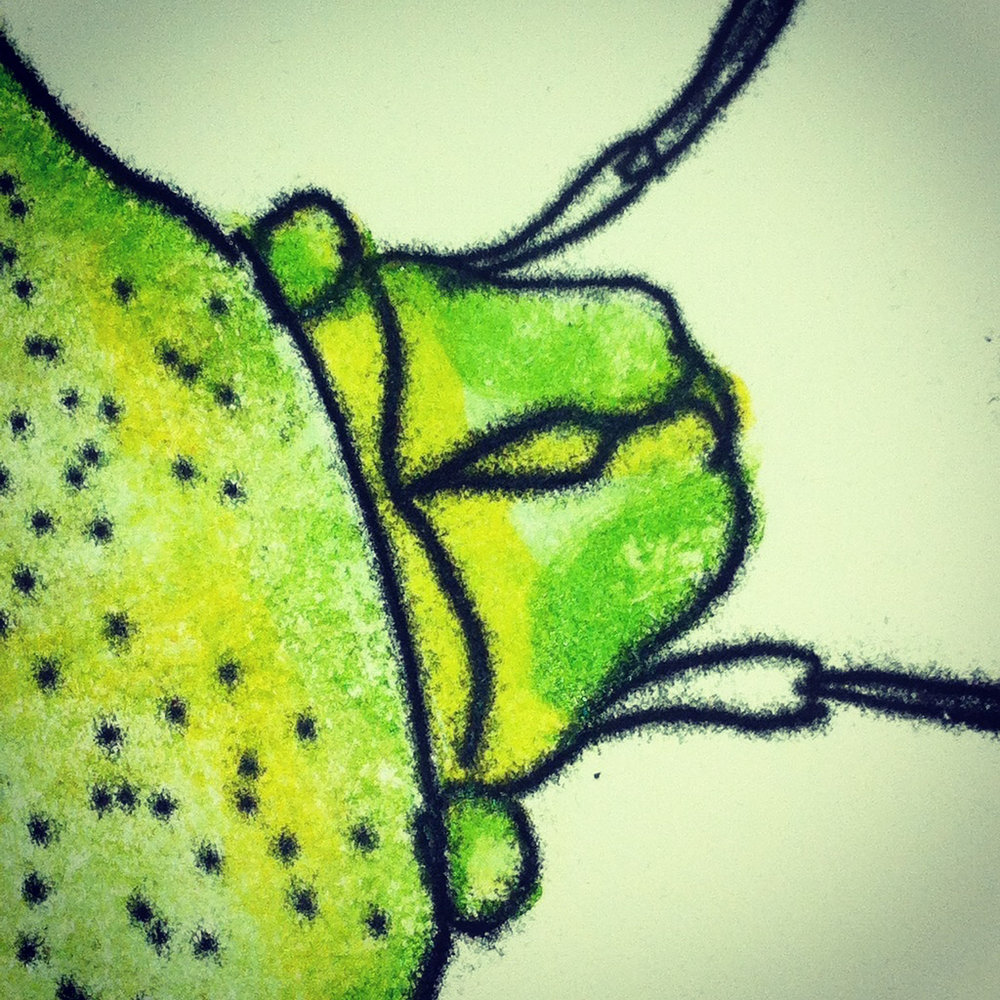 Detail from Birch Shield Bug (monoprint), 2016.   Wayward Fruit Tree  , Ormond Studios