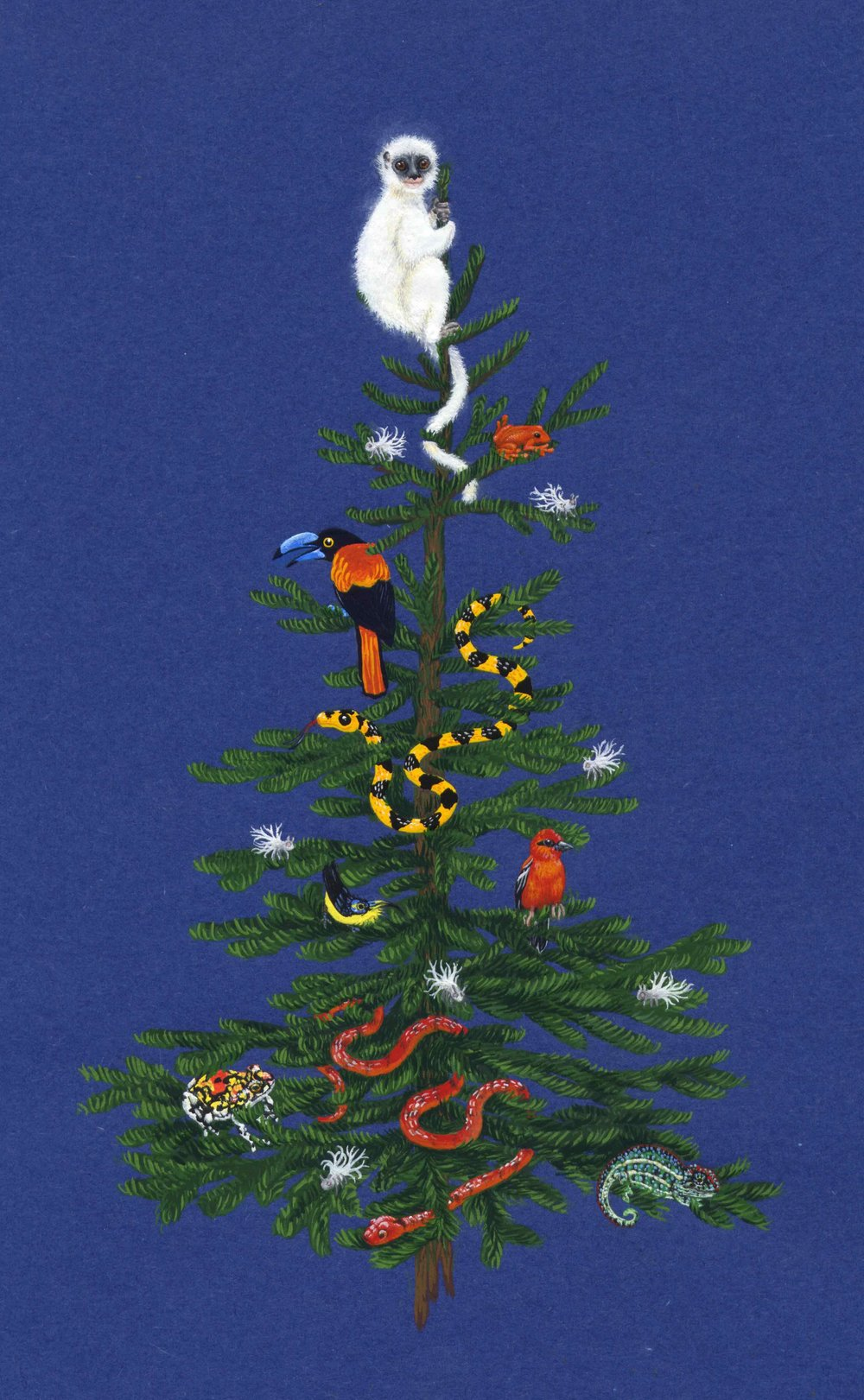 Malagasy Wildlife Christmas Card (gouache), 2010. Sold in aid of SEED Madagascar.