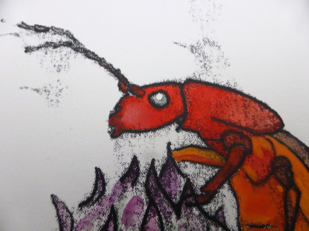 Detail from  Red Soldier Beetle  (monoprint and watercolour), 2017.  Bee Time Artist Residency , Emerson College, UK.