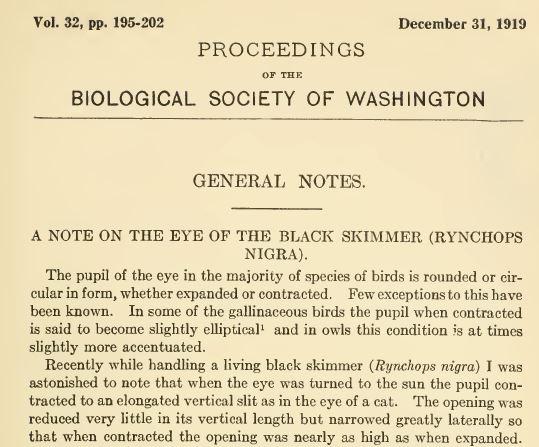 Excerpt 1919