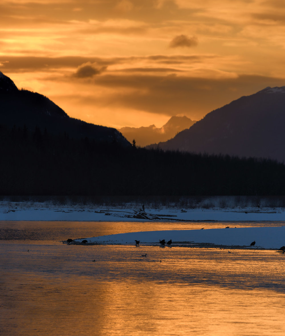 Sunrise on the Chilkat River. Nov. 2017