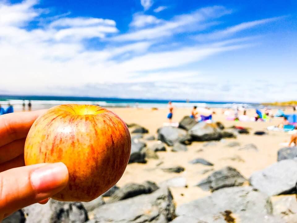 apple picnic .jpg