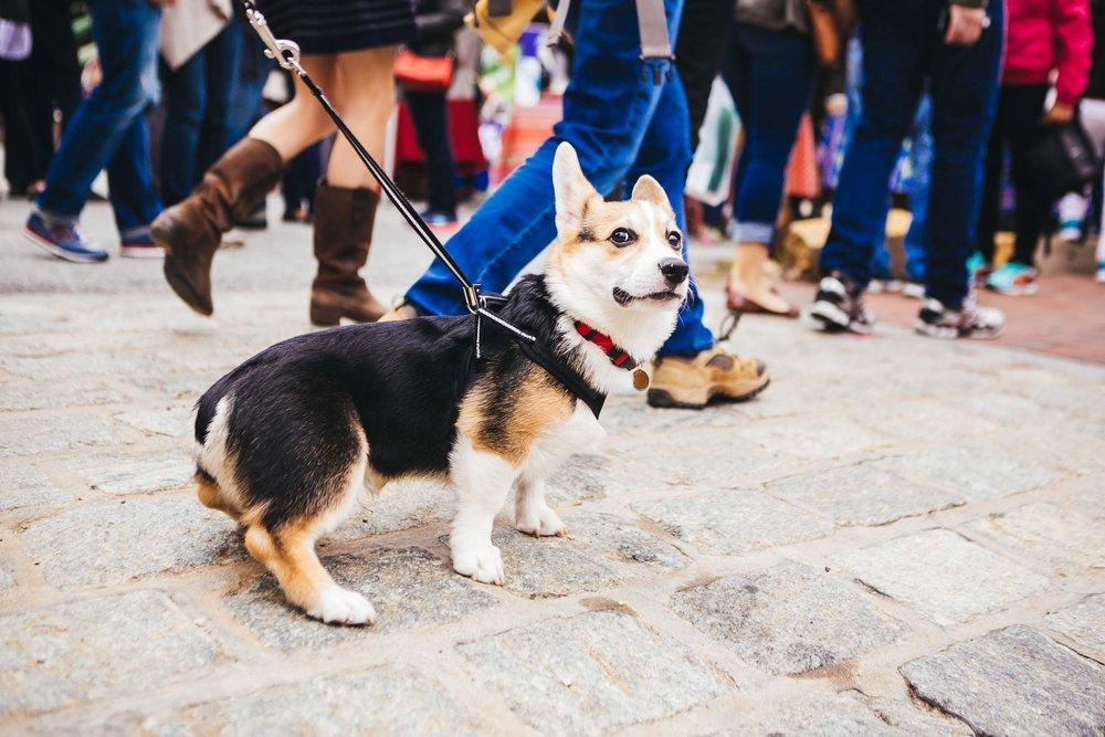 georgetown-french-market-festival-2016-6_26790044406_o.jpg