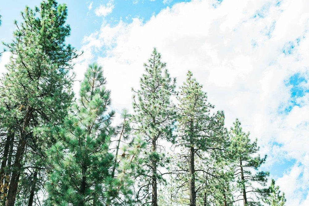 WrightwoodStyledEngagement_jaxconnolly.com_FB-76.jpg
