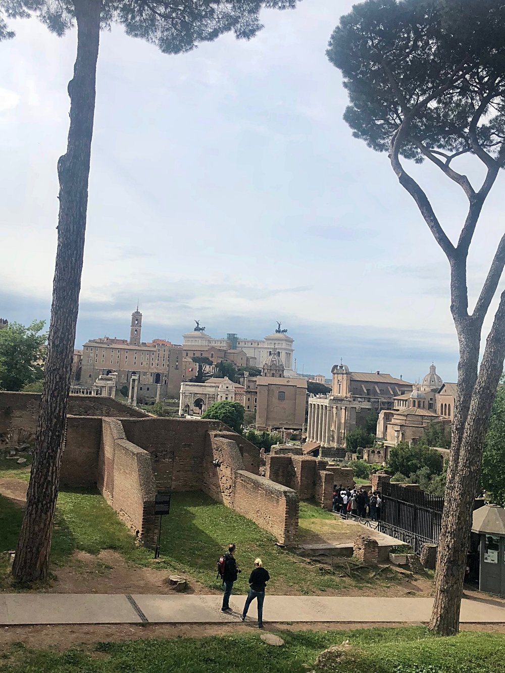 Roman Forum with umbrella trees.jpg