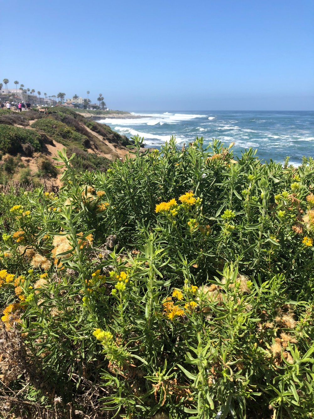 Where to hike in La Jolla.jpg