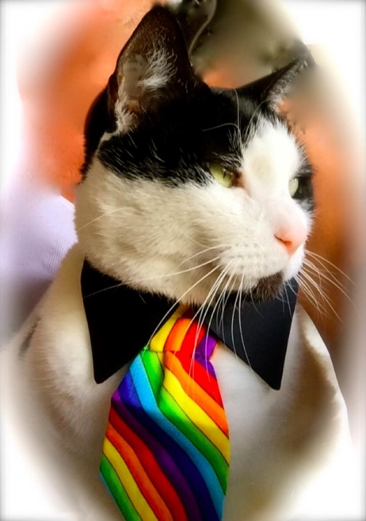 Rainbow Necktie.jpg