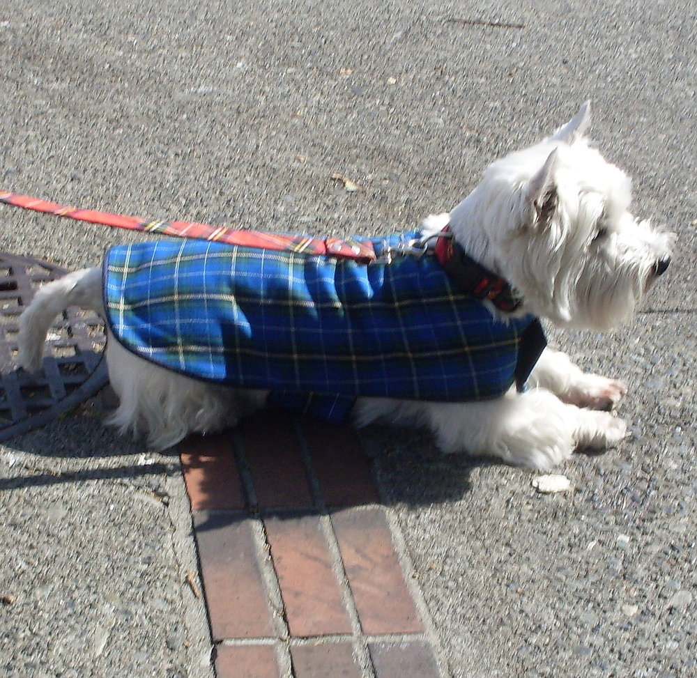 Plaid Coat-edited.jpg