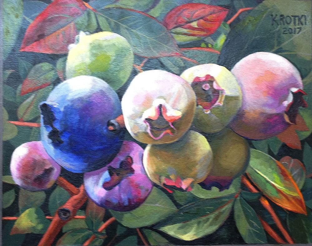 The First Blueberry  Saul Krotki
