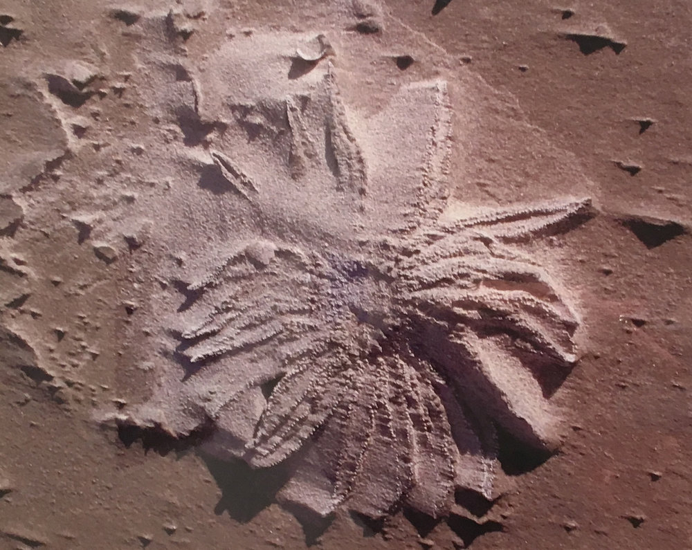 Sea Glyph Elizabeth Atly.jpg