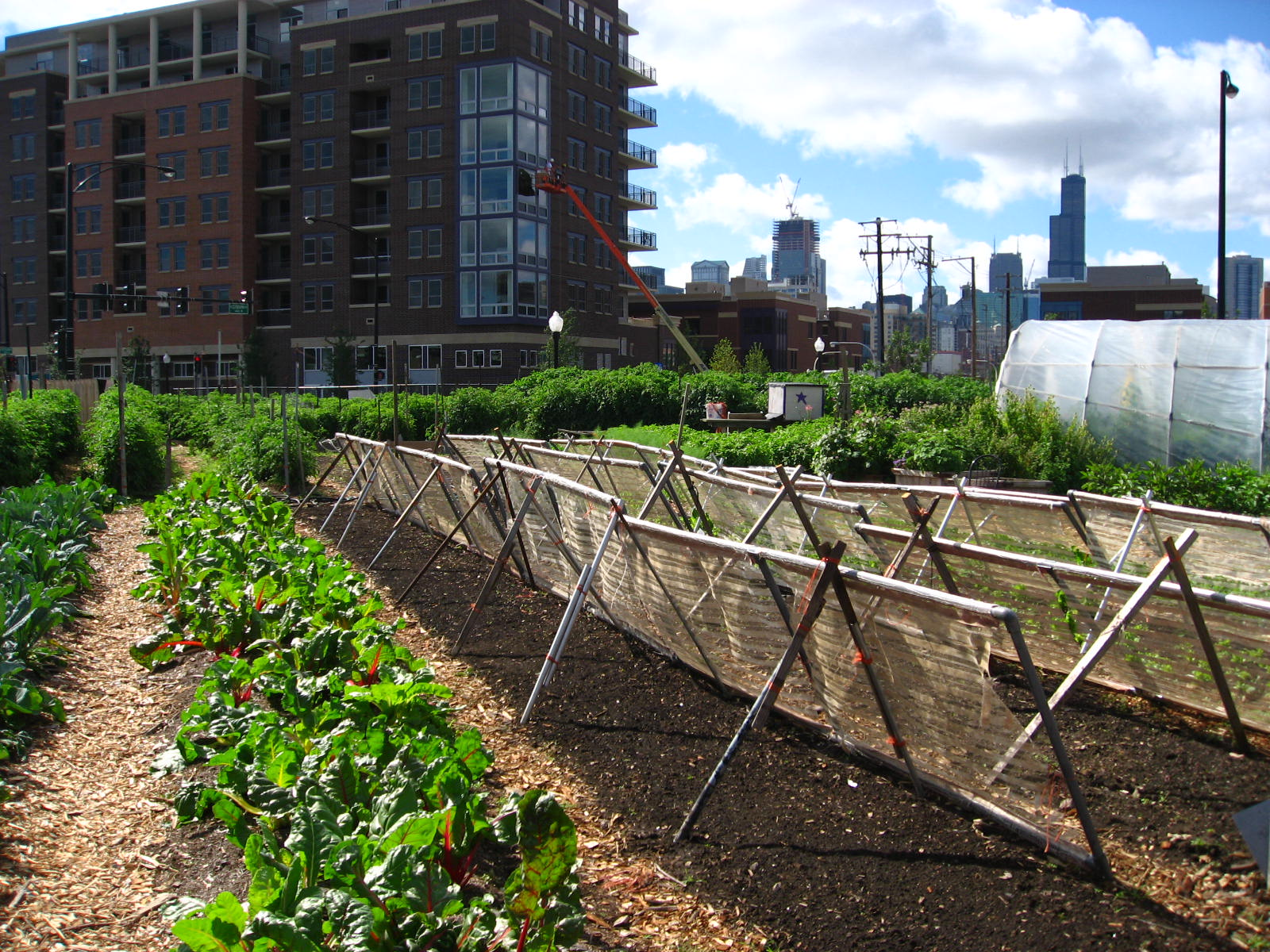 Urban Gardens - Healthy Agriculture