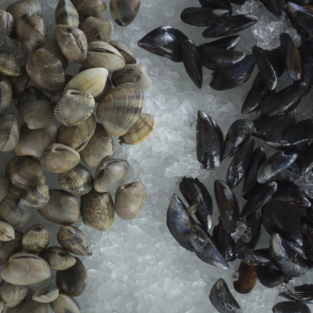 clams & mussels.jpg