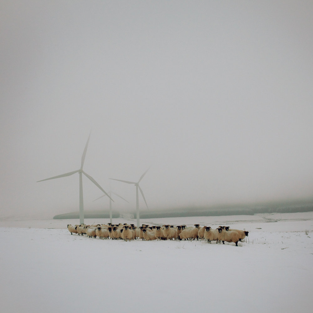 Blackfaced ewes and wind turbines, The Scottish Borders, January 2013. From the series  Drawn To The Land  // © Sophie Gerrard