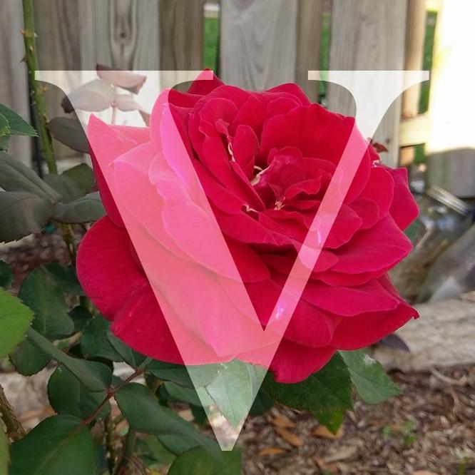 ~~~<@ The Rose Garden @>~~~