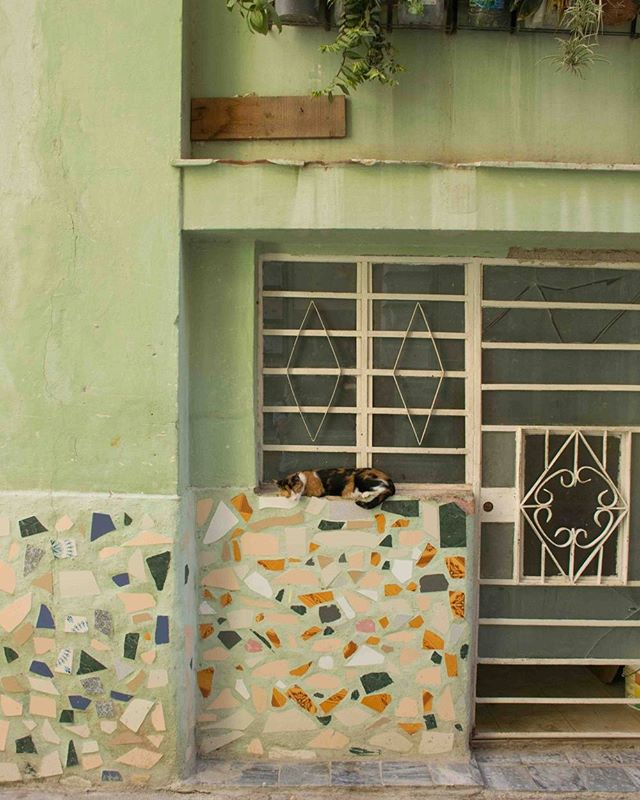 Happy #caterday! #lazysaturday #naps #havana #cuba #ifcuba #travel #cubano