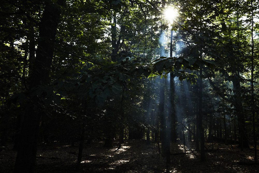 Forest_345.jpg