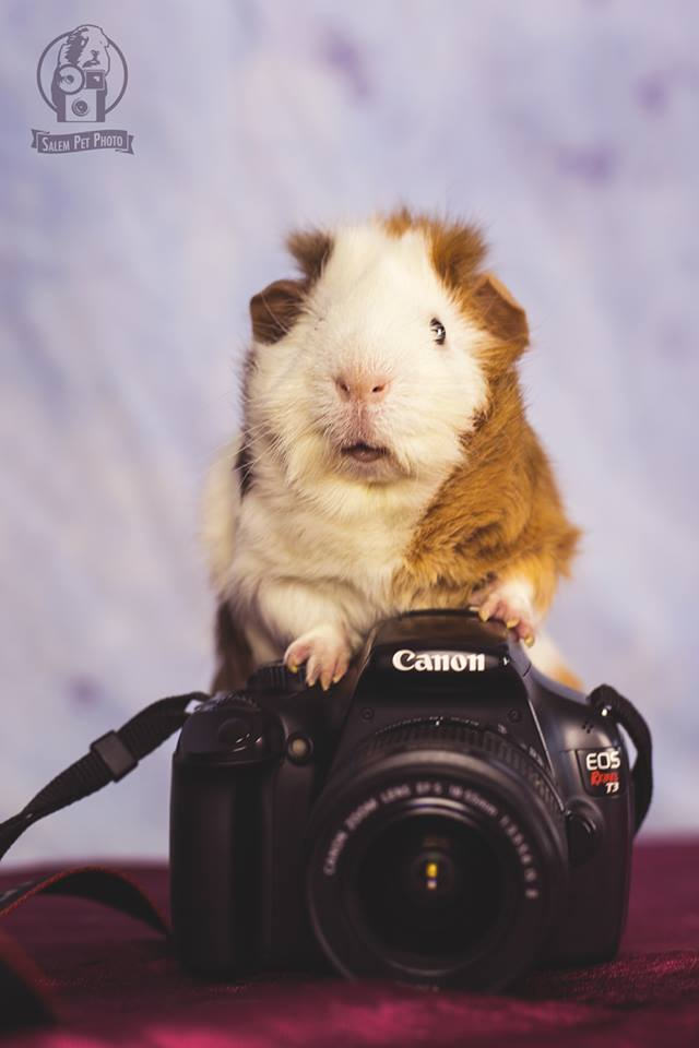 Salem Pet Photo