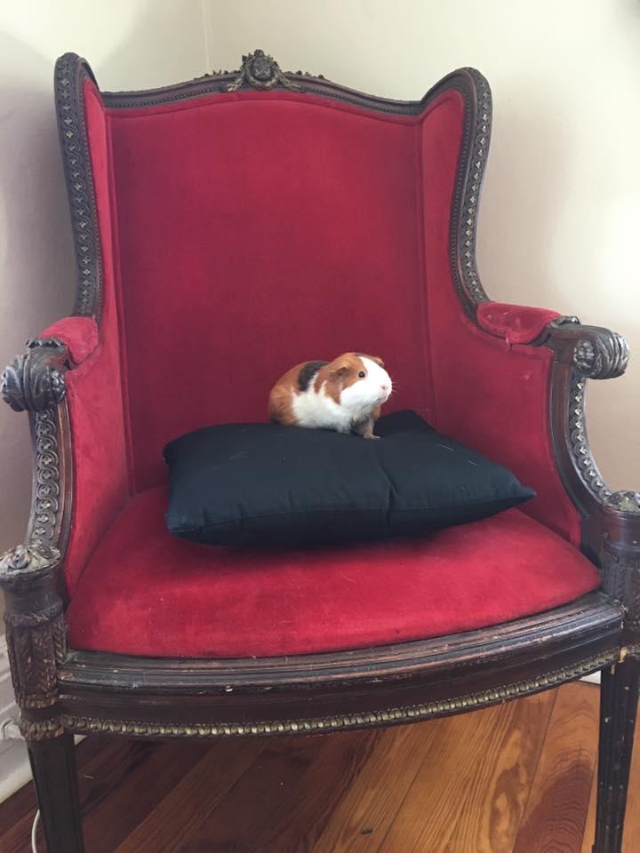 Saffron on her throne