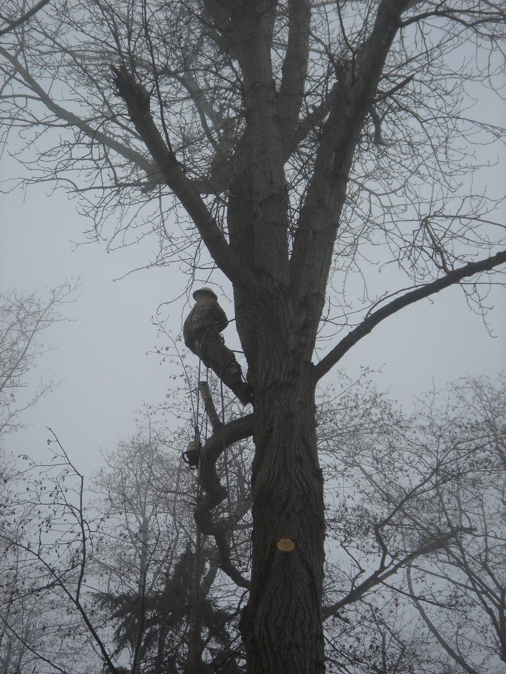 foggy tree limbing.JPG