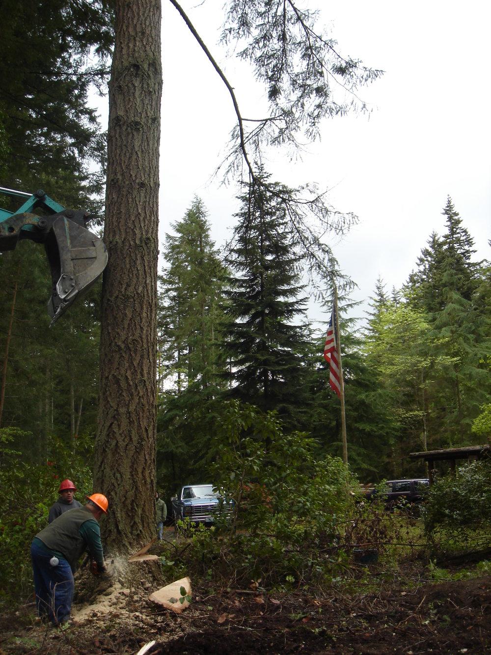 tree cut down 2.JPG