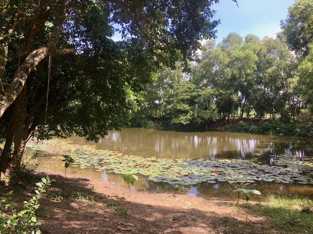 My eerily peaceful view from the swing overlooking the pond at the Choeung Ek killing fields