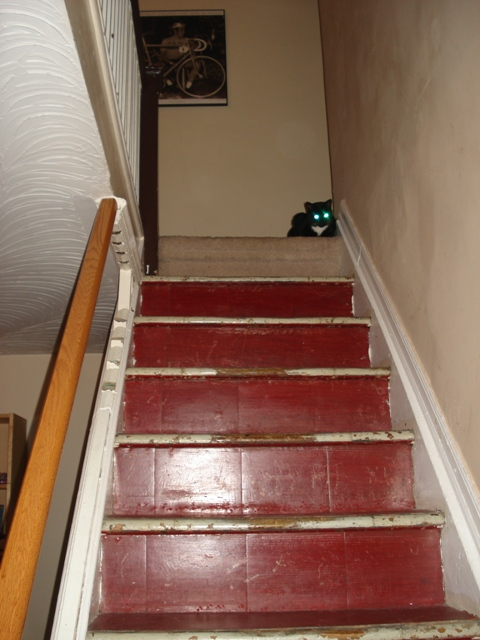 lesley-metcalfe-stairs-after-carpet-removed.jpeg