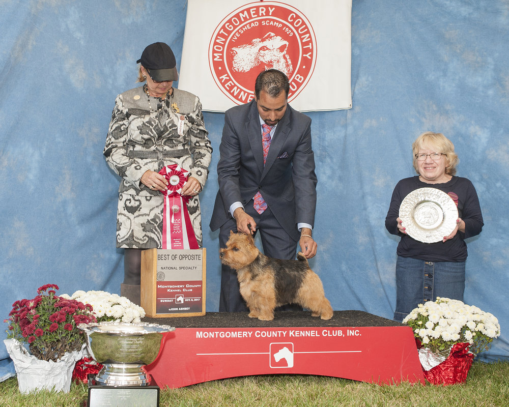 """Skip winning Best of Opposite Sex at the 2017 NTCA National Specialty under judge Ms. Elizabeth """"Beth"""" Sweigart, handled by Alfonso Escobedo."""