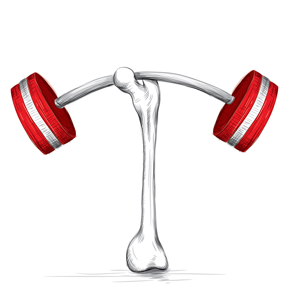 Osteoporosis Strong Bone.jpg