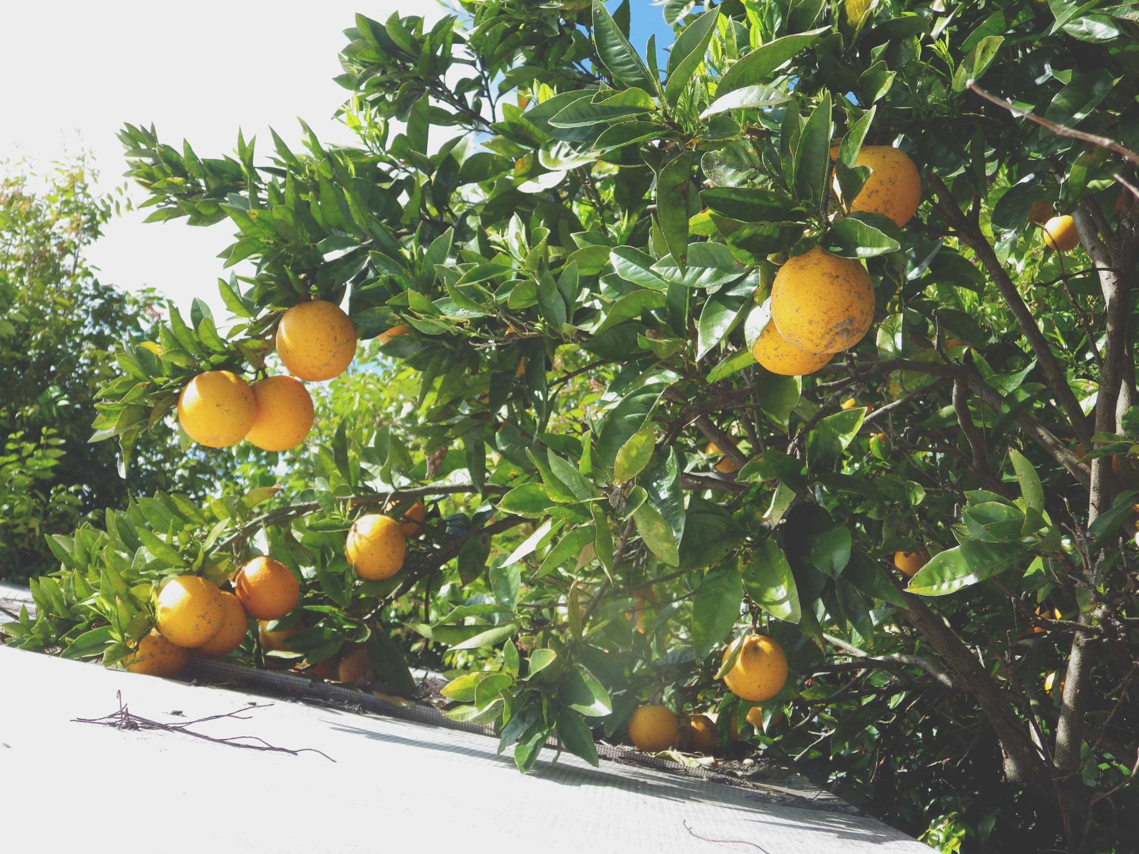 hanginfruit