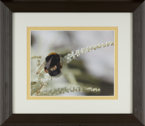 Bumble Bee - 13x16 in., rental framed $40