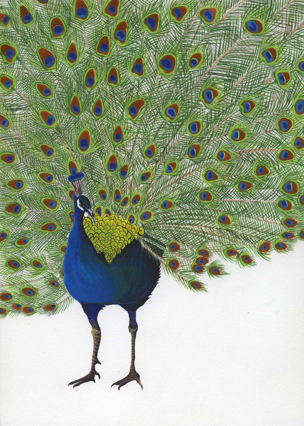 Peacock_Ana Maria Velasco.jpg