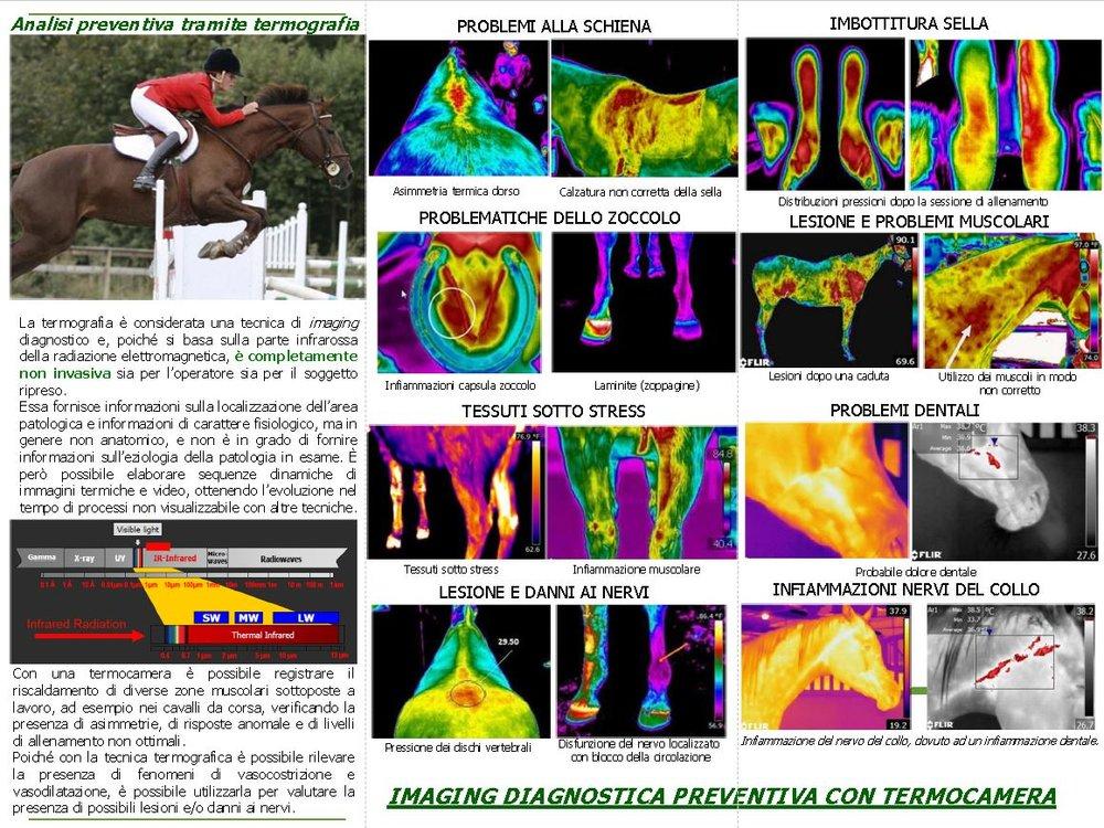 Servizio di diagnosi termografica equina