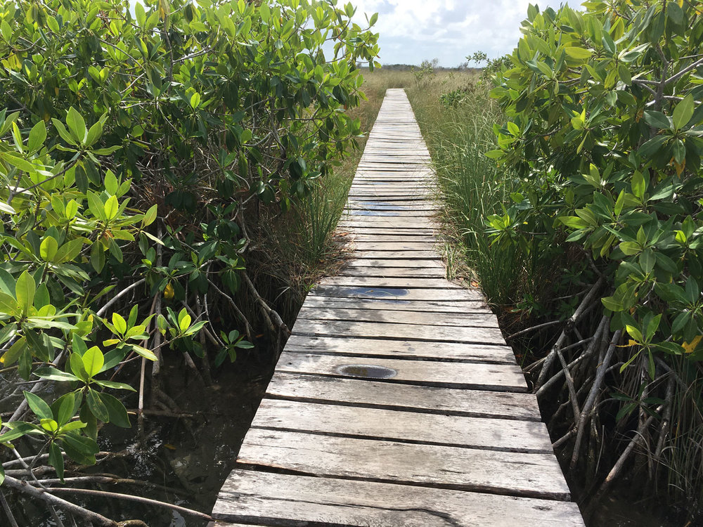 The boardwalk across the wetlands back to the boats at Xlahpak point