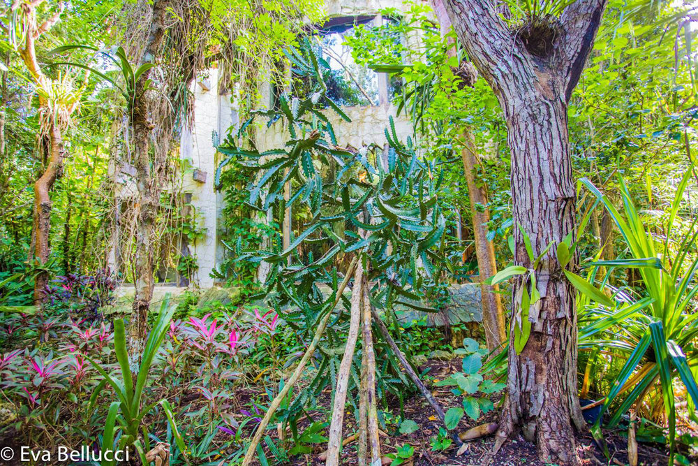 The artist's house is completely integrated with the jungle