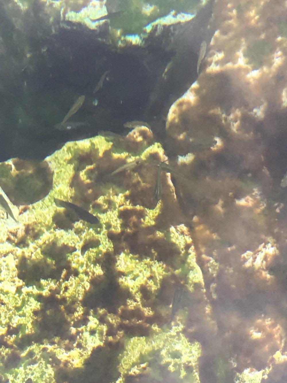 Hammocks_and_Ruins_Riviera_Maya_Mexico_Explore_What_to_Do_Playa_del_Carmen_Cenotes_13.jpg