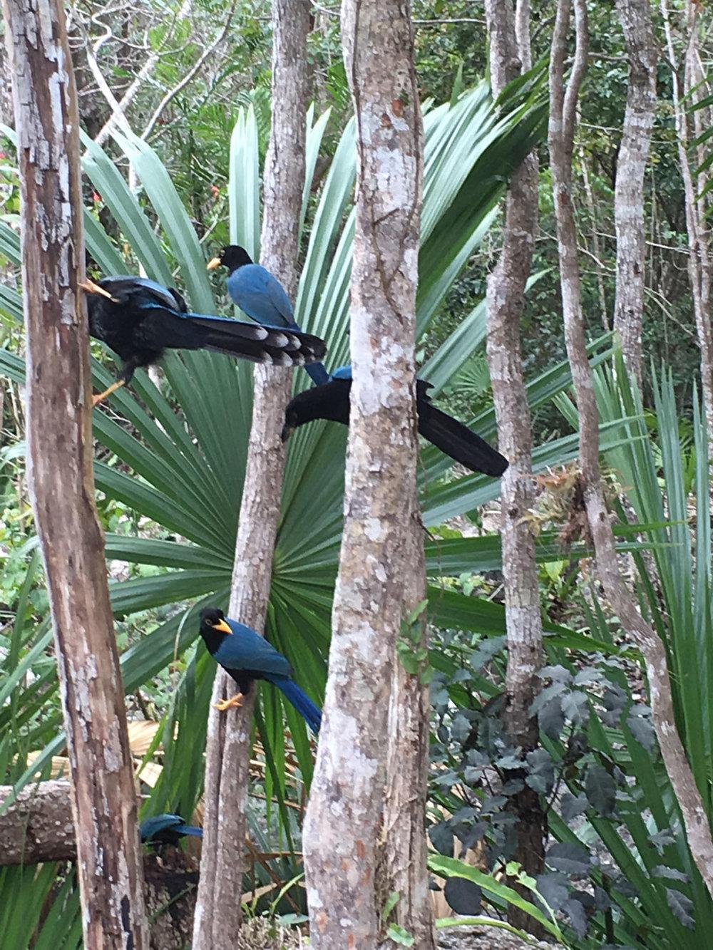 Hammocks_and_Ruins_Riviera_Maya_Mexico_Explore_What_to_Do_Playa_del_Carmen_Cenotes_6.jpg
