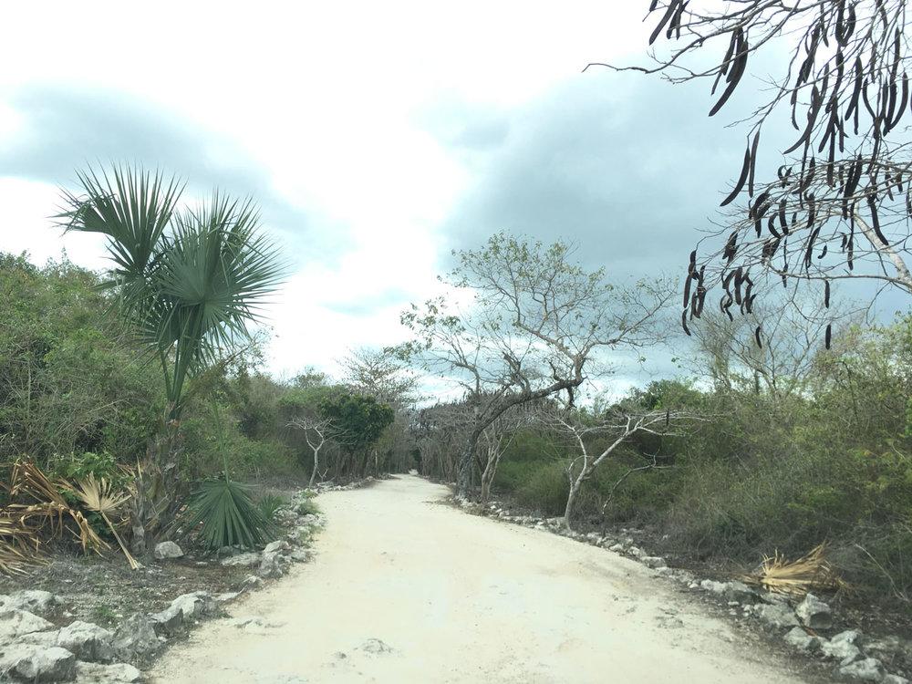 Hammocks_and_Ruins_Riviera_Maya_Mexico_Explore_What_to_Do_Playa_del_Carmen_Cenotes_21.jpg