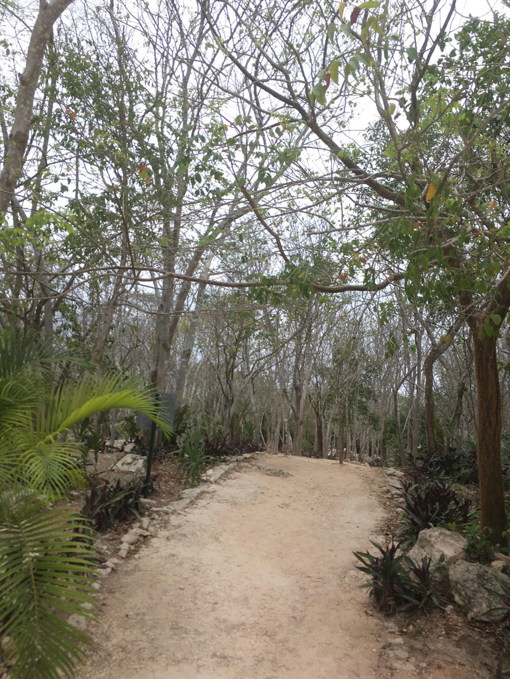 The path to the cenote. It is a 20-minute walk.