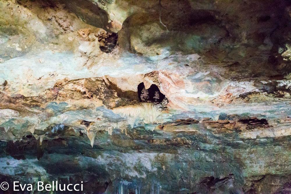 Hammocks_and_Ruins_Riviera_Maya_Mexico_Explore_What_to_Do_Valladolid_Yucatan_Cenote_Samula_13.jpg